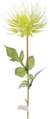 Immagine di Fiore giallo tipo crisantemo