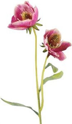Immagine di Papaveri rosa